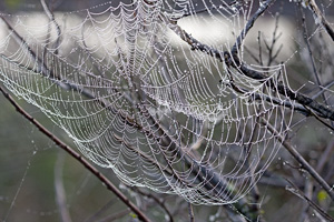 Web and Dew